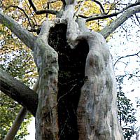 樹勢回復治療